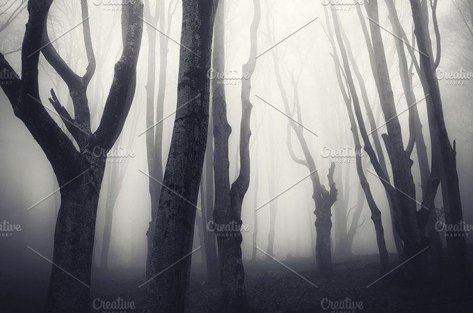 Haunted forest on Halloween Photos Haunted Halloween forest with fog - haunted forest ideas for halloween