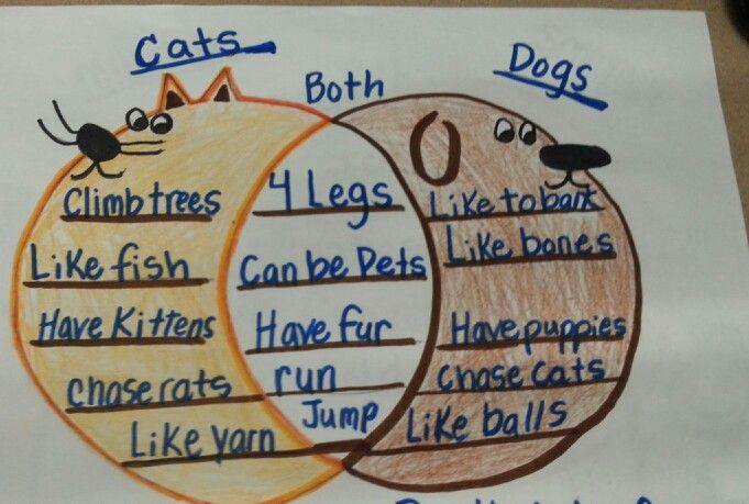 compare and contrast essay cats and dogs