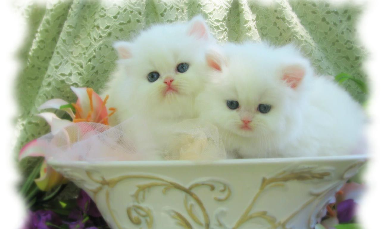 I Don T Think This Is The Bowl They Meant Kittens Cutest Cute Cats And Kittens Cute Cat Wallpaper