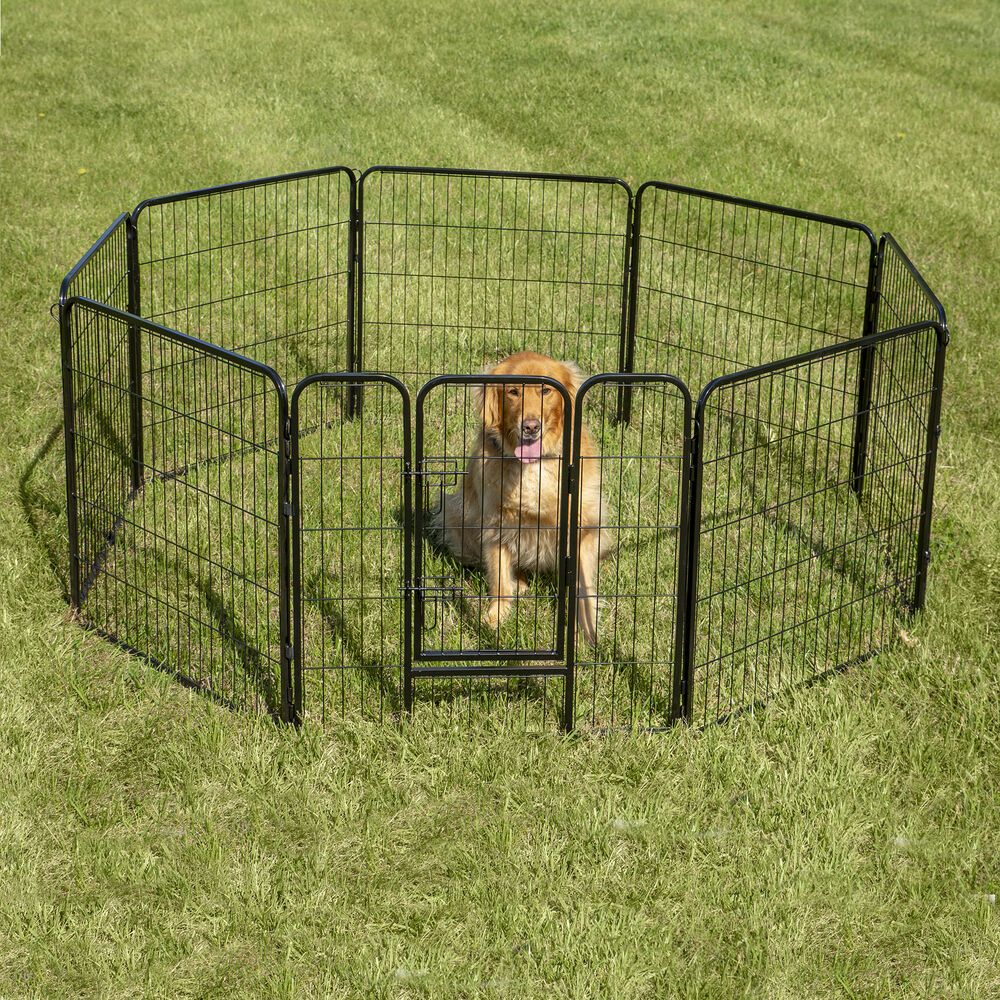 Dog Fence Home Depot di 2020