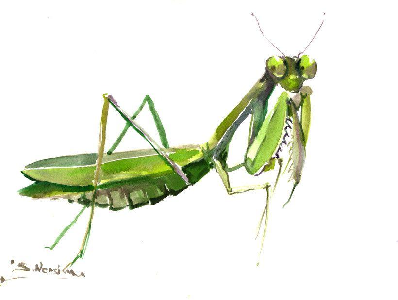 Praying Mantis 12 X 9 One Of A Kind Original Watercolor