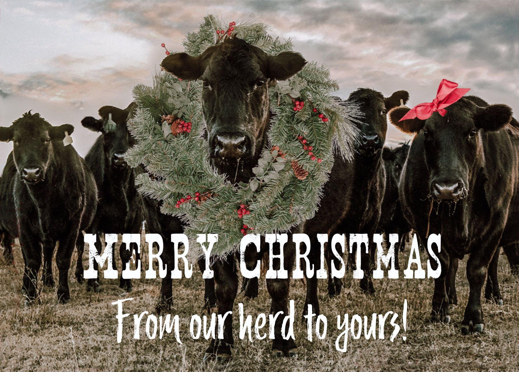 Western Christmas cards, Angus cattle holiday cards - pack of 25 printed cards, blank inside or ...
