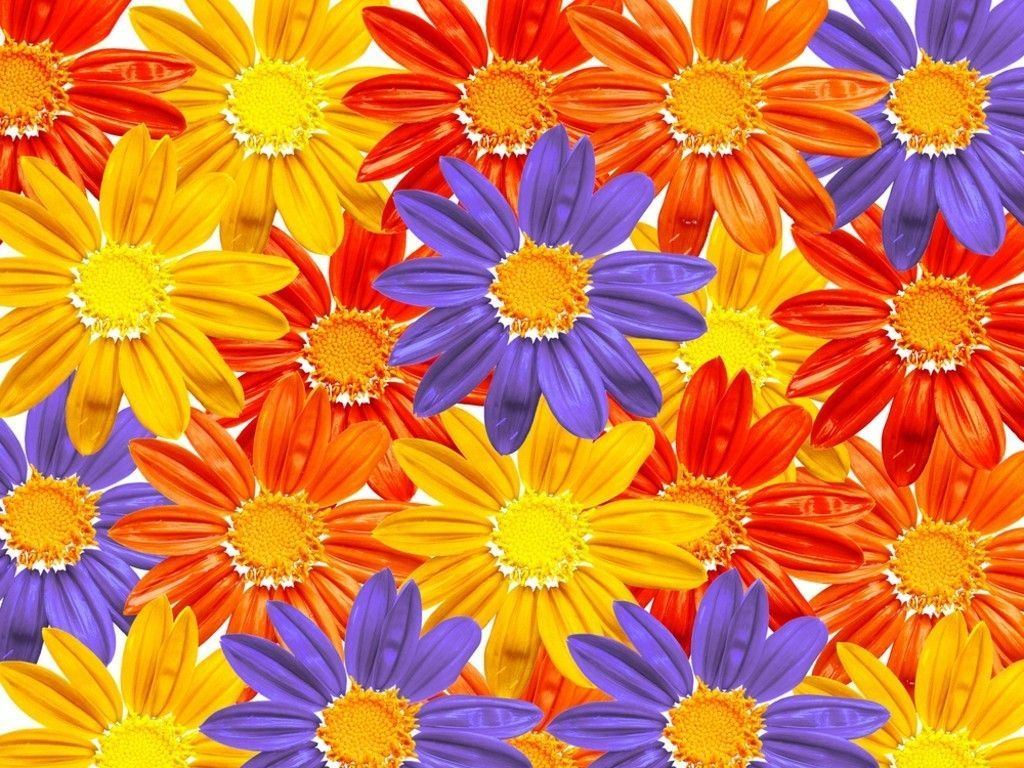 colorful flower texture - cute wallpaper | colorful things