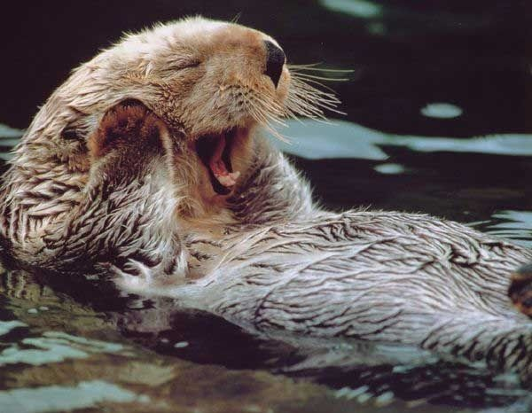 15 Dating Faux Paws As Told By Animals Funny Animals With Captions Funny Animals Otters