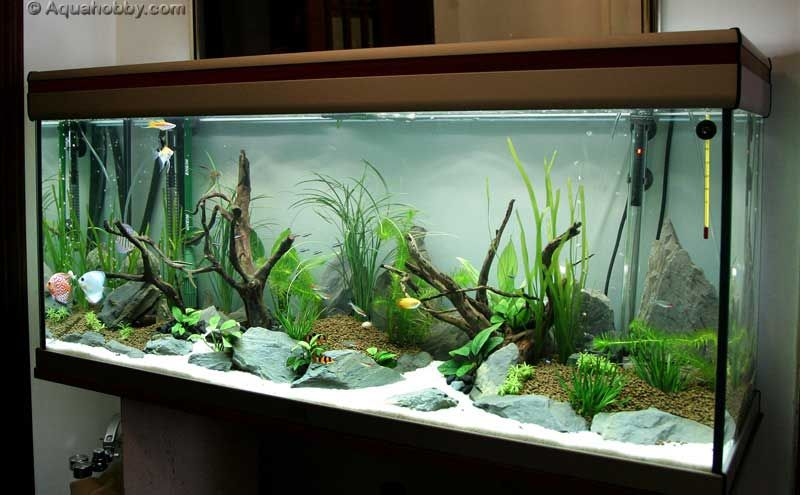 Fish tank of august 39 10 at the age of aquariums tropical for Freshwater fish tank setup