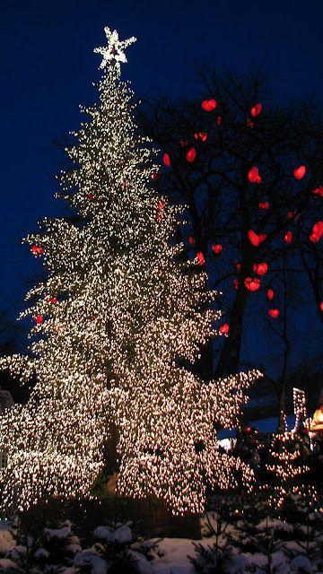 Christmas tree Tis The Season Pinterest Christmas lights