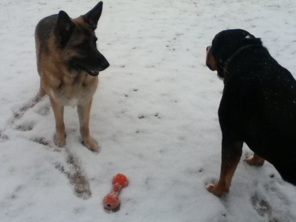 """""""I double-dog dare you to get my orange toy!!"""""""