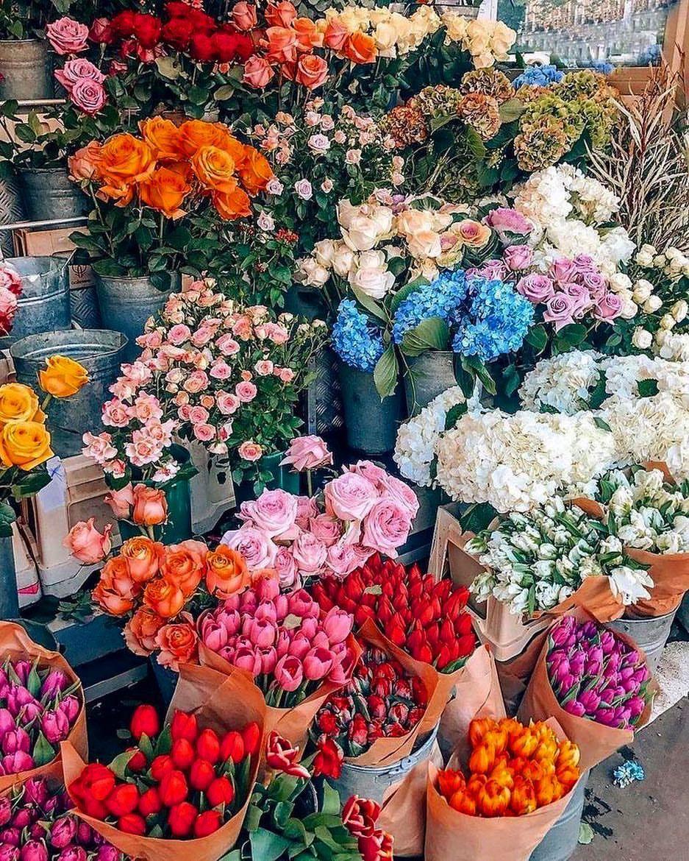 Monday Mood Have A Great Week Mondayshopping Mondaymotivation Mondaymood Beautyineverything Newweek Pretty Flowers Flower Aesthetic Beautiful Flowers