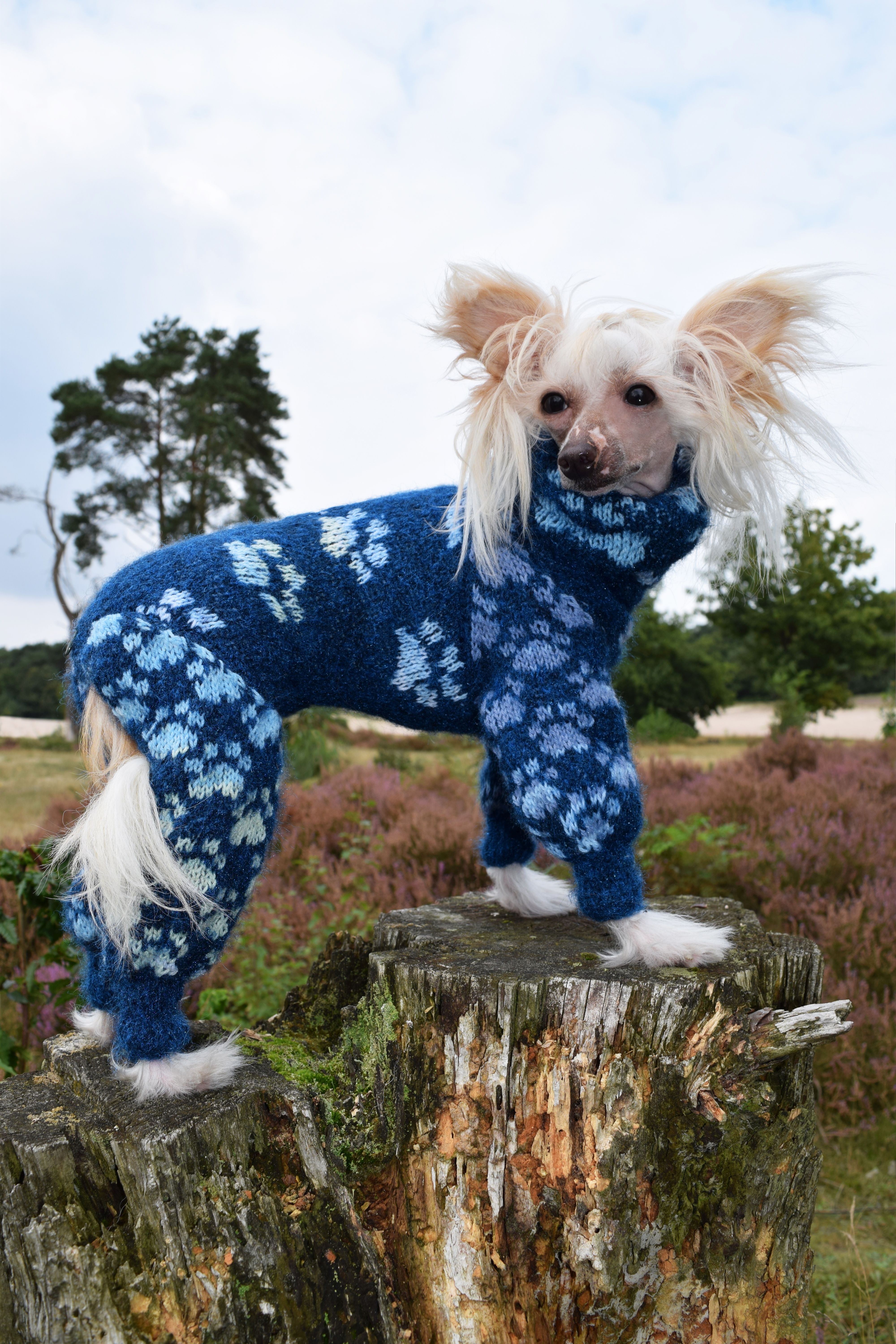 Paws 'n Bones in alpaca dazzle. *A* Chinese crested dog