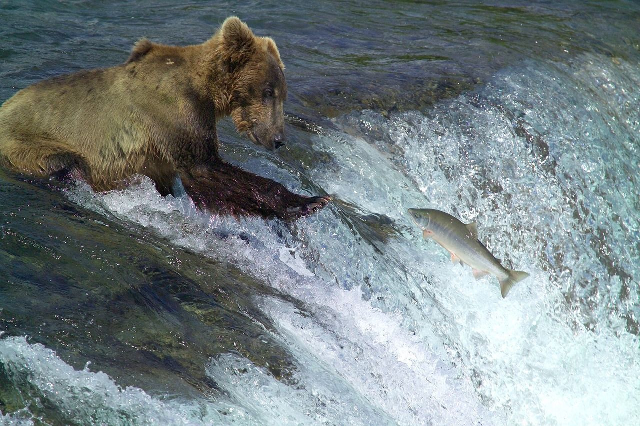 kodiak bear in water