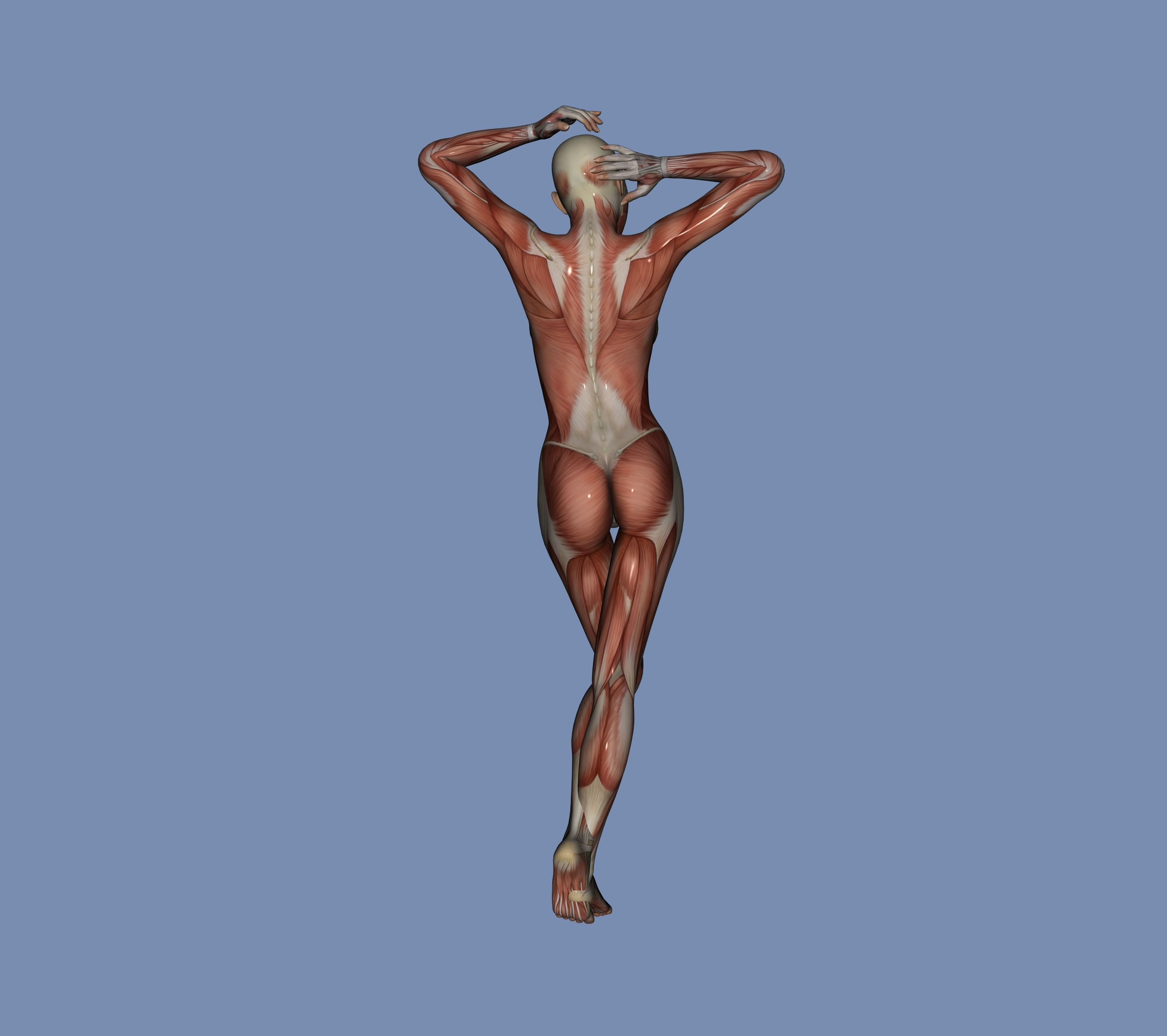 muscles #Musculos #Body #Cuerpo #anatomía #anatomy #reference ...