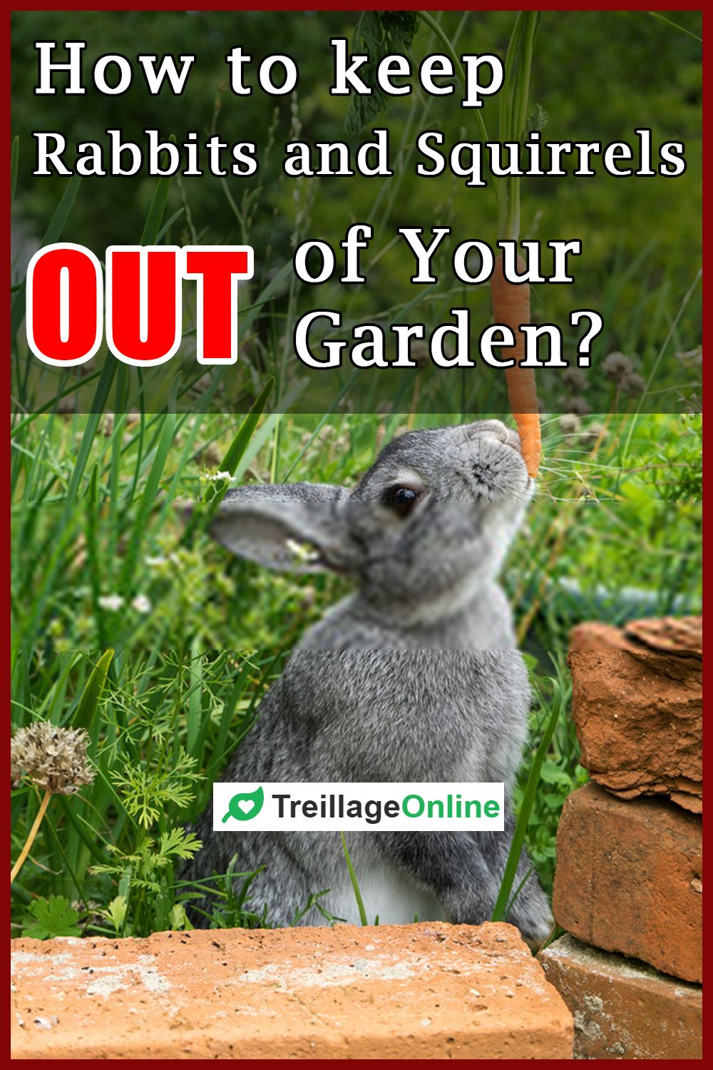 How to Keep Rabbits and Squirrels Out of Your Garden? in ...