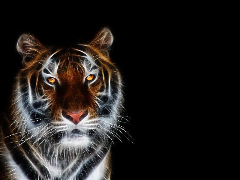 Animales Fondos De Escritorio Hd: Fondos De Escritorio