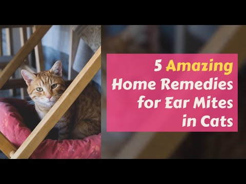 14 Home Remedies For Pets Some Pets Pet Remedies Healthy Pets Apple Cider