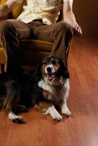 How To Get Rid Of Dog Pee Smell On A Wood Floor House