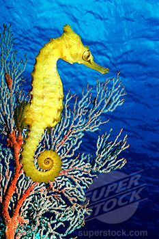 Australia S Great Barrier Reef Great Barrier Reef Life Under The Sea Photo