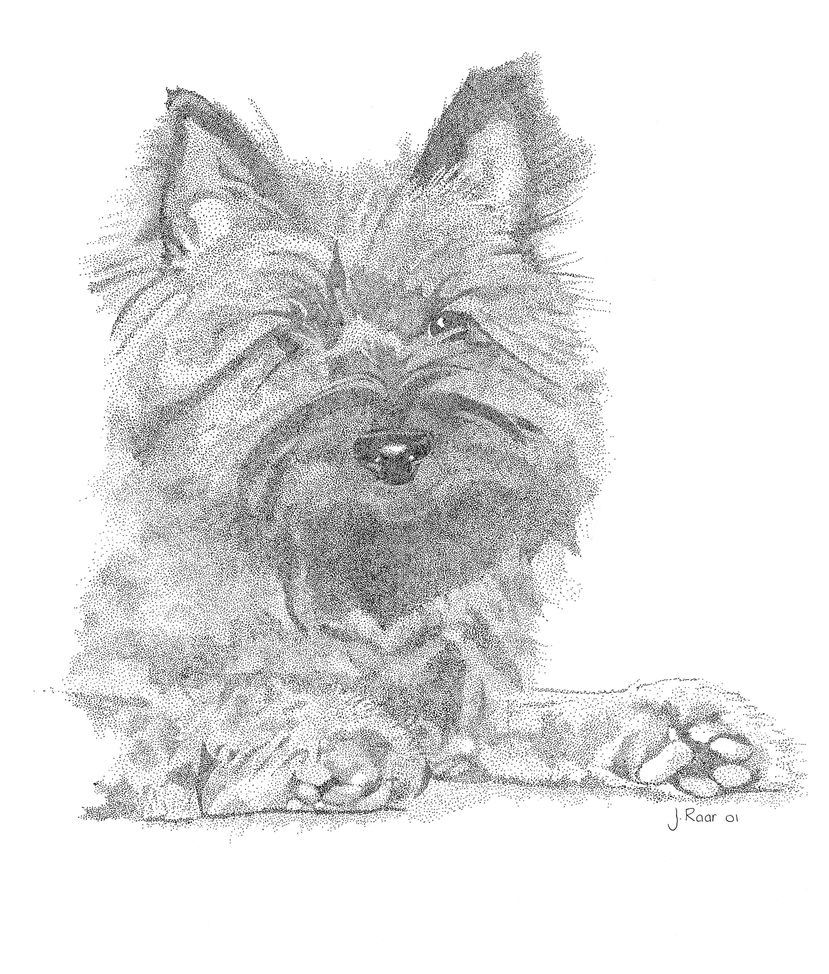 To The Point Cairn Terrier Pen Drawing Pen Tekening