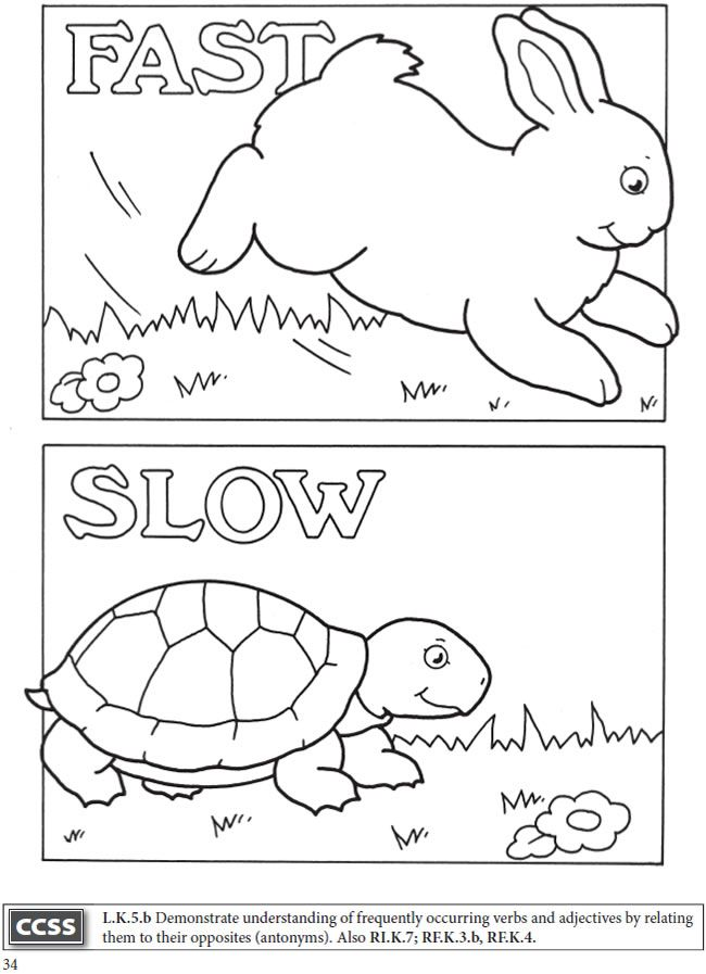 Fast And Slow Printable Worksheets