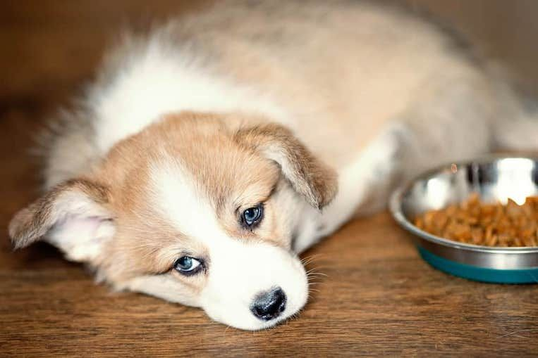10 Most Common Dog Health Problems And Solutions Dog Coughing Dog Health Problems Dog Top