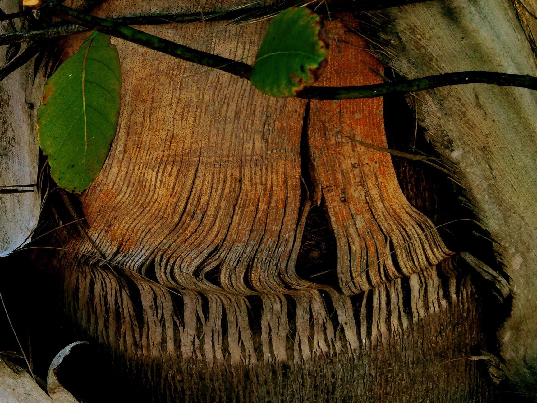 On My Walking Trail I Love Florida S Palm Tree Barks Florida Palm Trees Nature Palm Trees