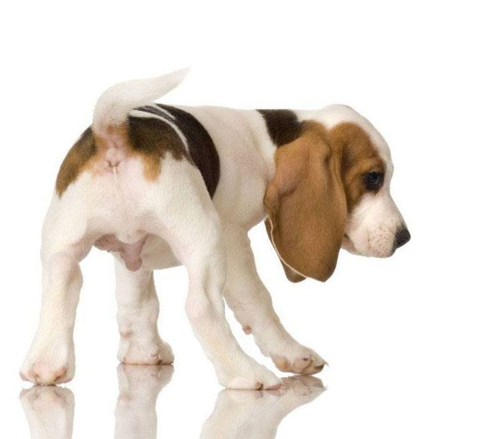 Charming Puppy Bums Beagle Puppy Puppy Pictures Puppies