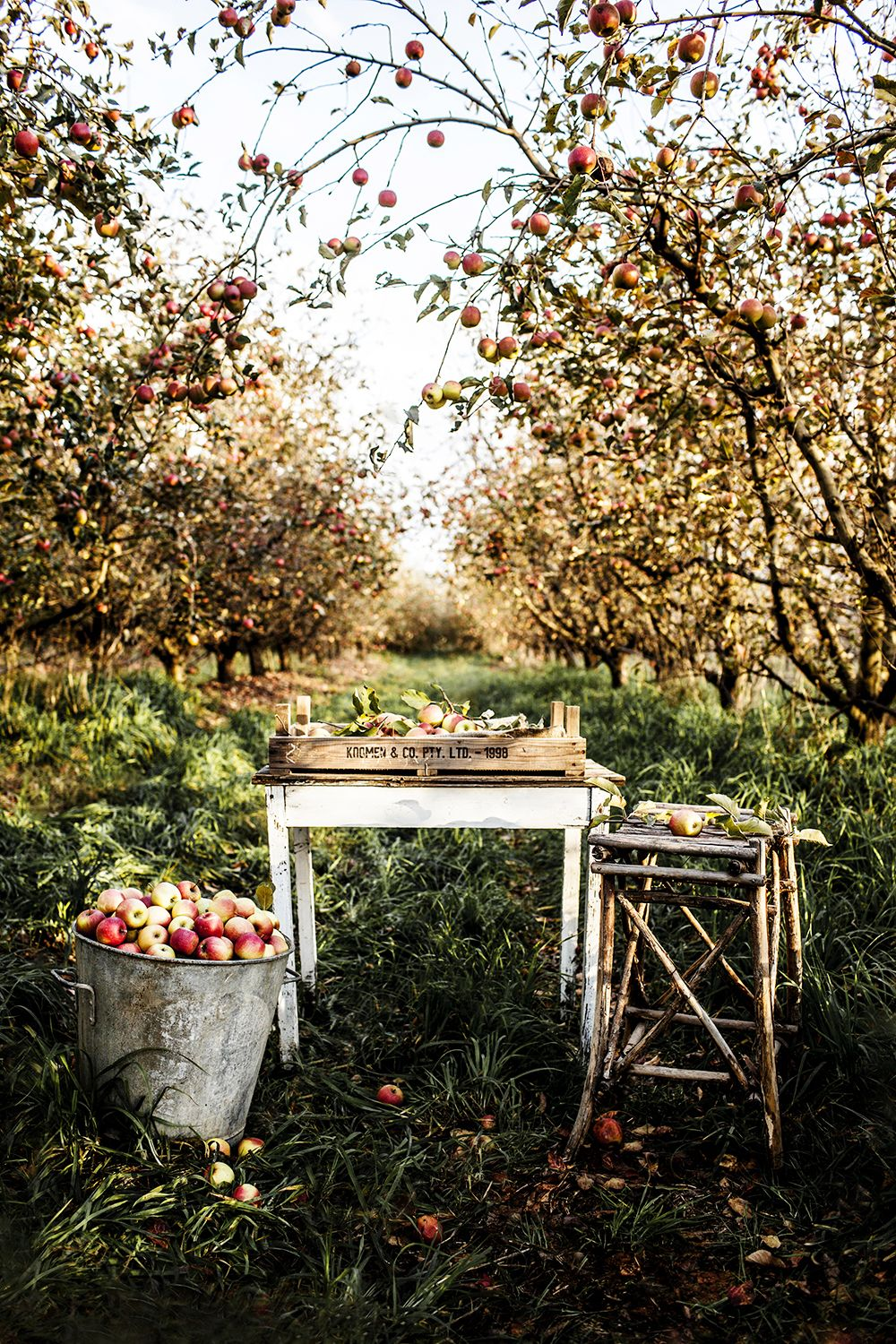 Ahhhh, love Autumn and the thought of picking apples to