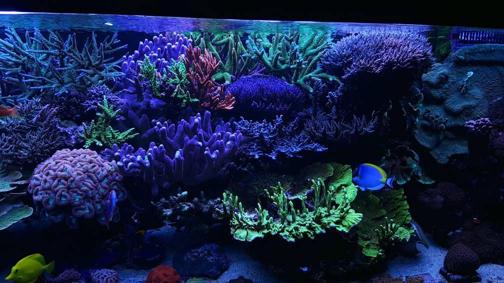 Are You A Master Reef Chemist Dr Randy Holmes Farley Has Posted Up The Cheist Certification Question At Link So Go Ahead And Click