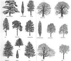 tree identification - Google Search