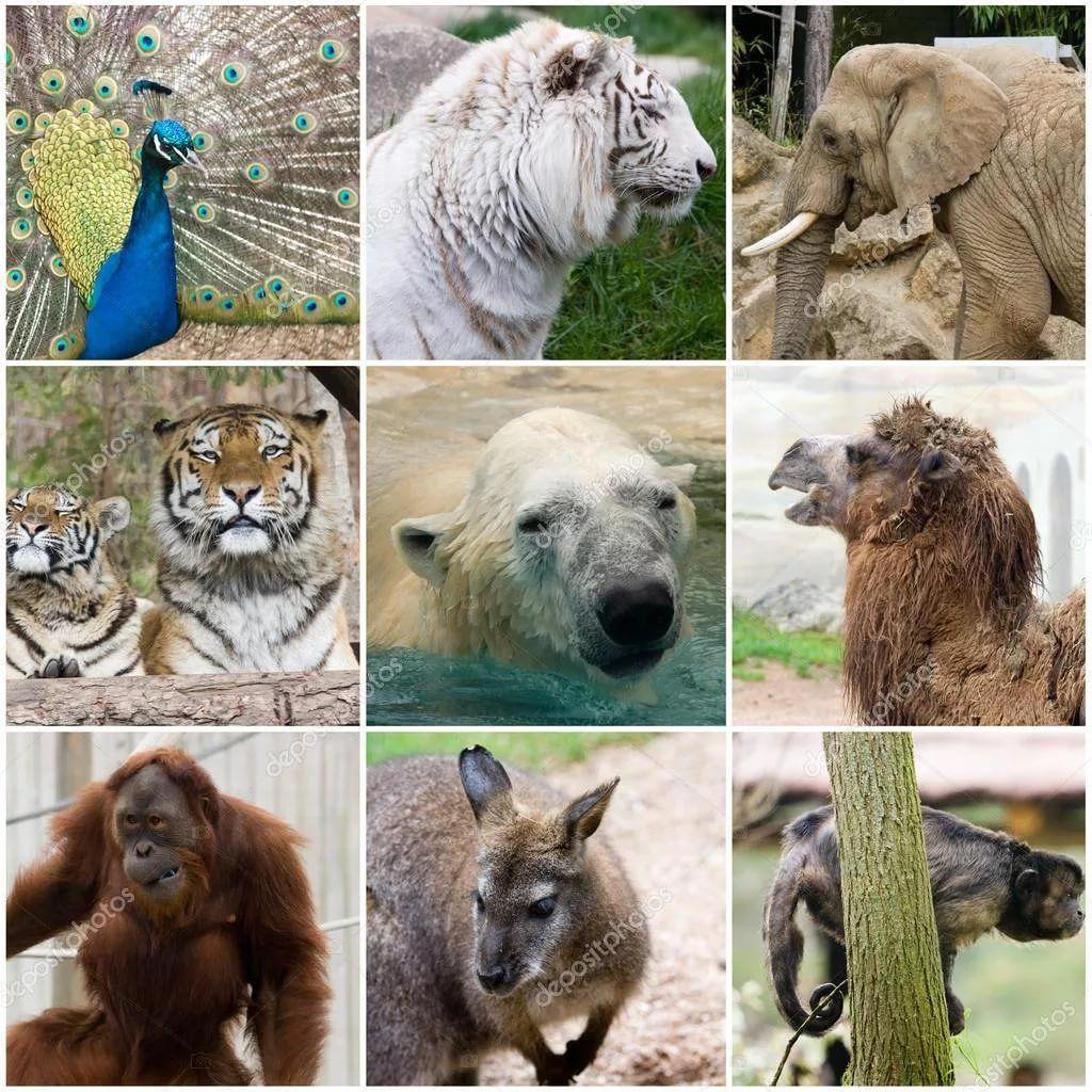 картинка коллаж животные: 10 тыс изображений найдено в ...