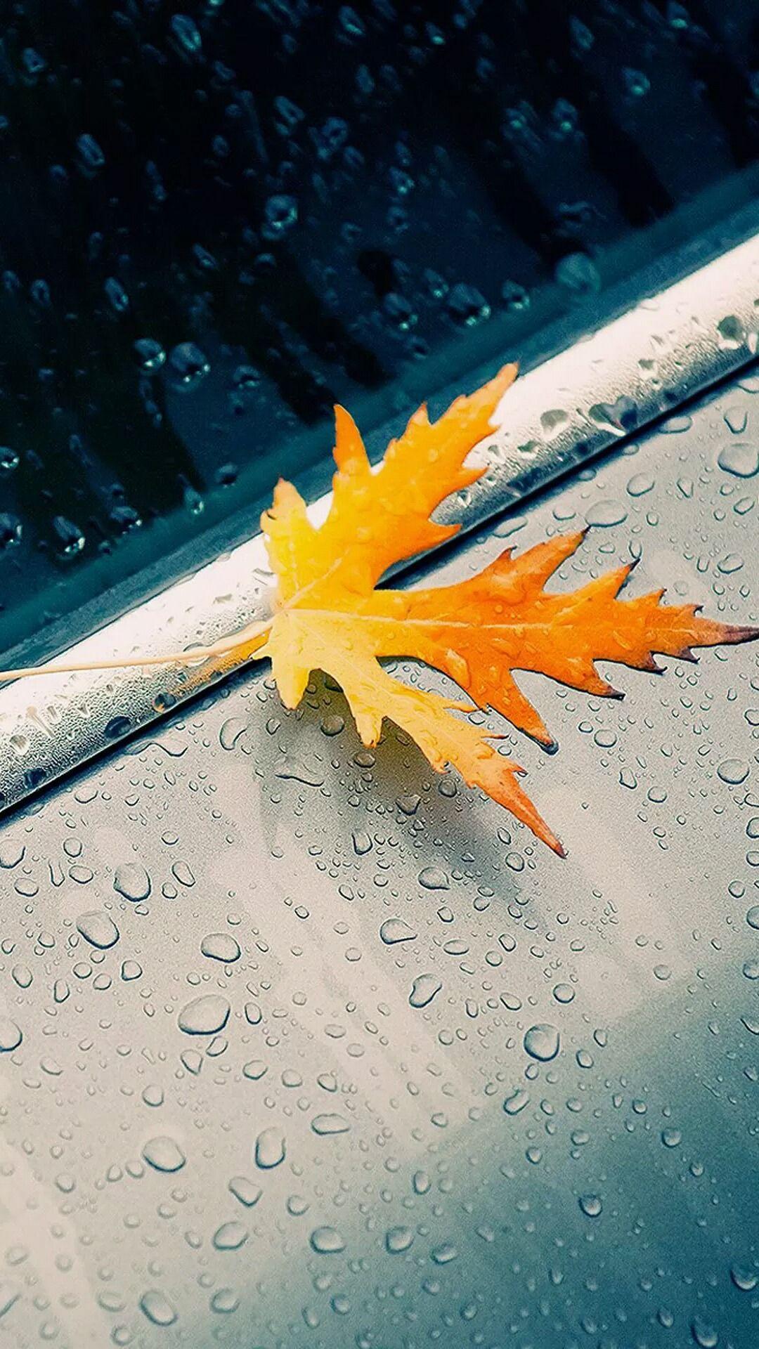 Autumn Rain iPhone wallpapers. Tap to see more Fall season iPhone wallpapers, lockscreen, fondos ...