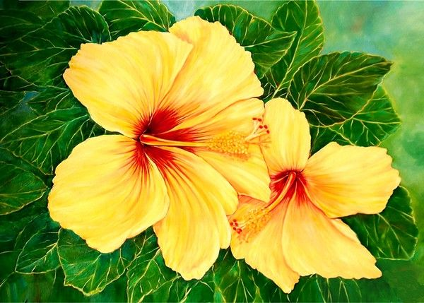 hawaii state flower yellow hybiscus by mary abing on artwanted