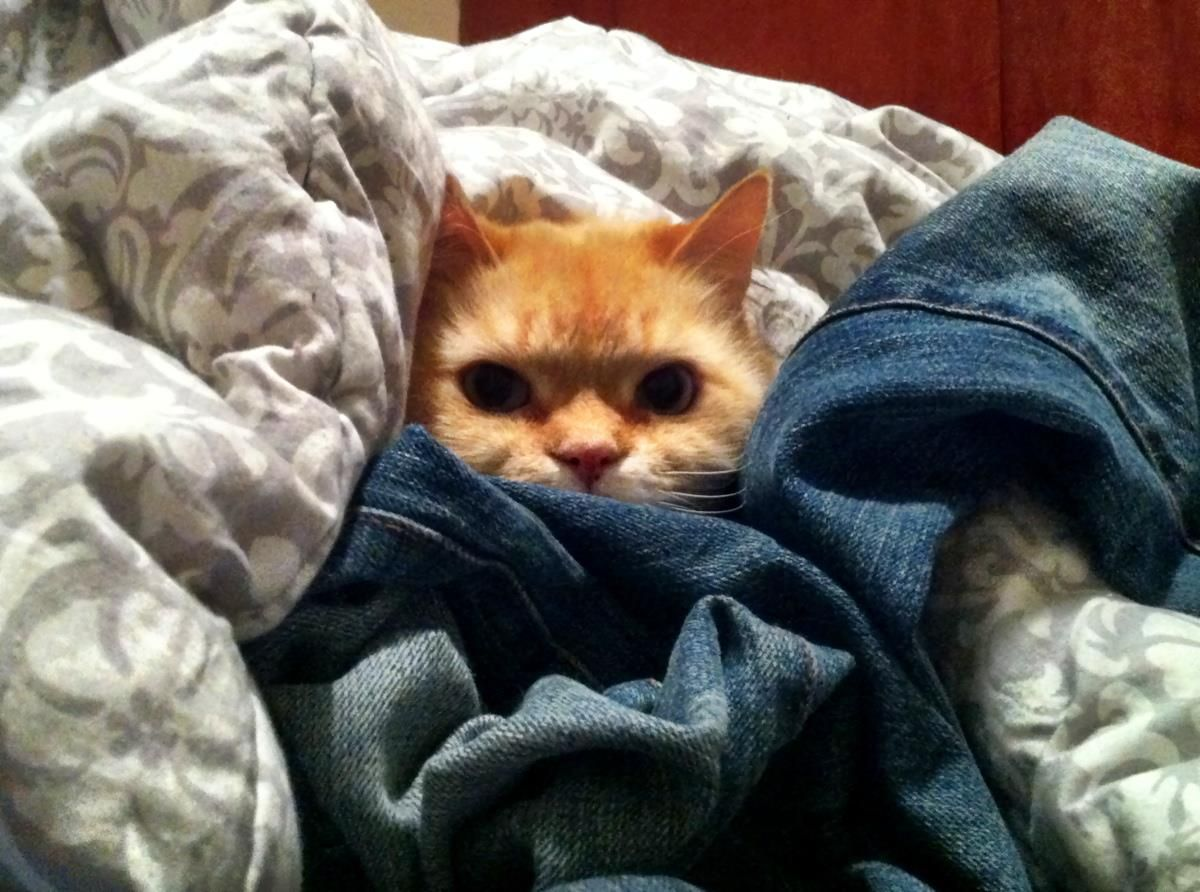"""Today is national """"Hug Your Cat Day!"""" This guy didn't want"""