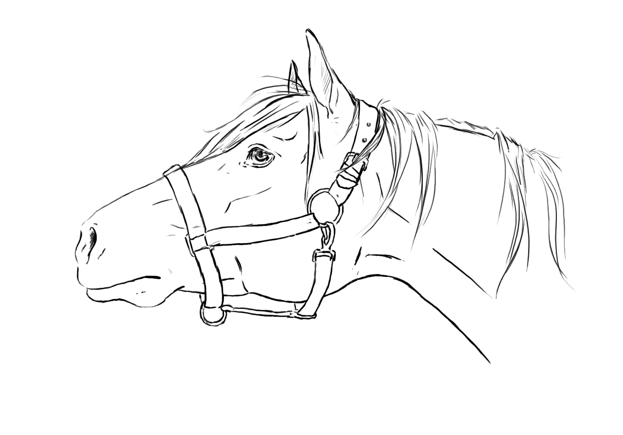 Horse Head Lineart Horse Drawings Horse Coloring Pages Horse Art