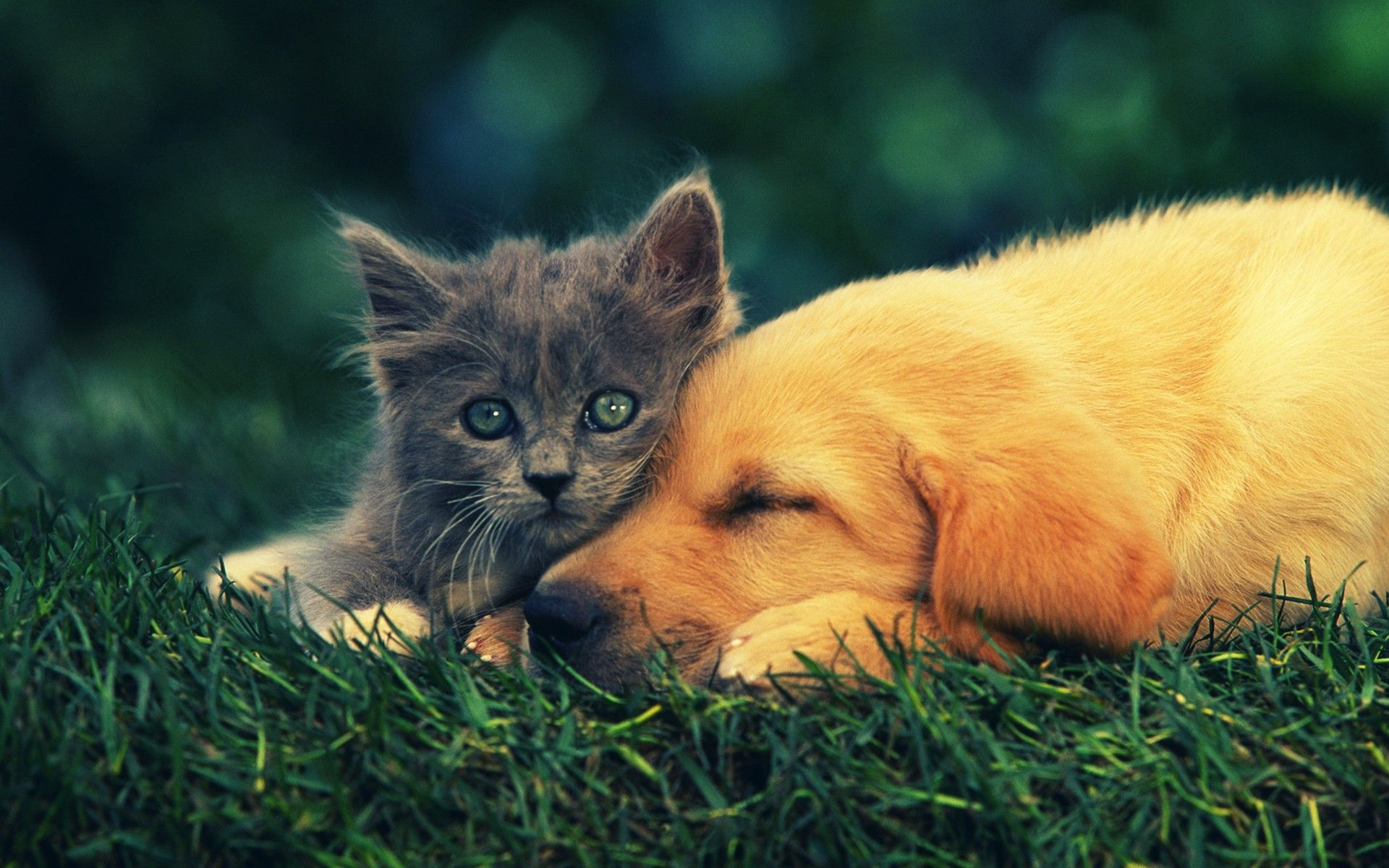 Cute Cat And Dog Best Friends Kittens And Puppies Animals Animals Friends