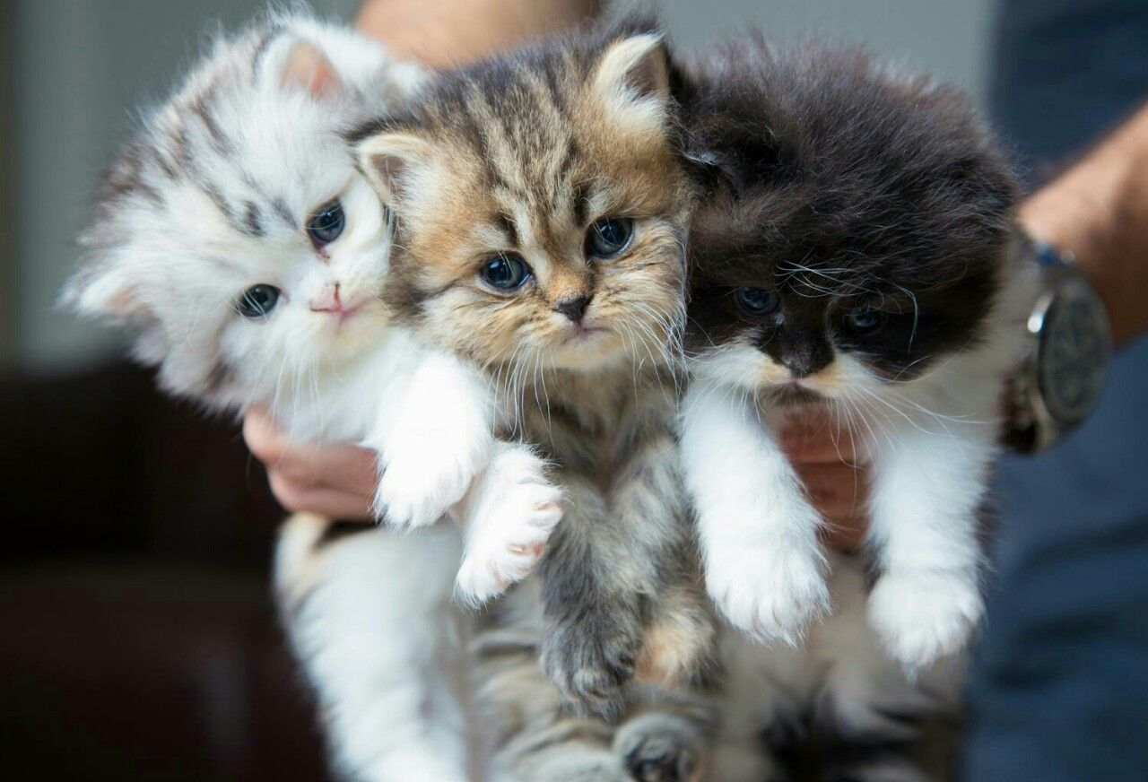 приложении картинки с котятами смешные и милые и щенками красочностью, пожалуй
