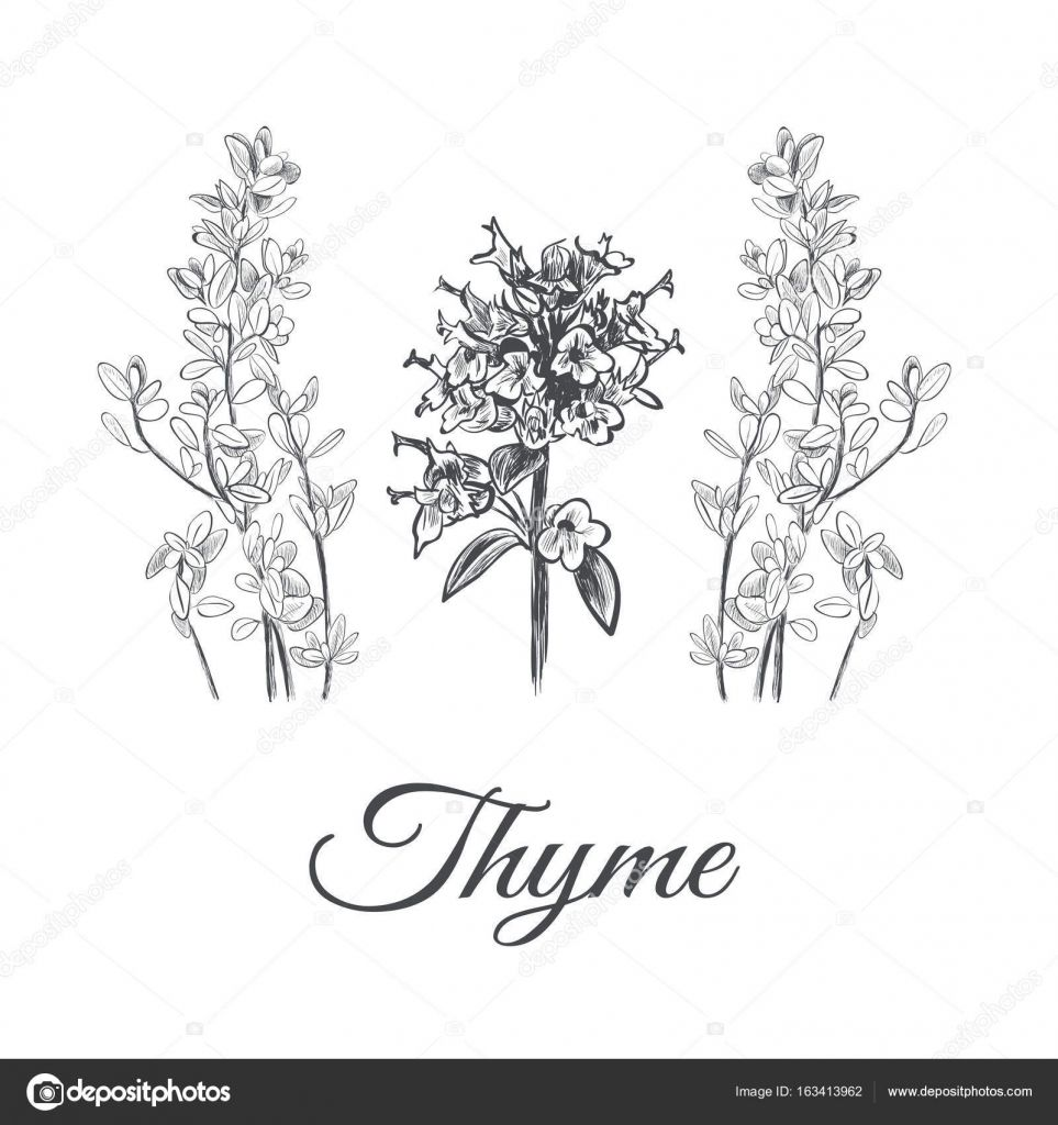 Wild Mountain Thyme Sheet Music For Voice Sheet Music Sheet The Voice