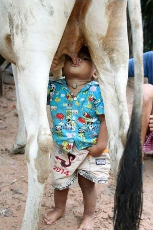 The best thing for that little boy! His body is telling him he needs calcium to grow and whole milk is the best way for that kids need the fat in the milk for their brain development and bones. How often when you where little did you eat butter plain or you kids do it now! It is cuz your body is telling you what it needs!