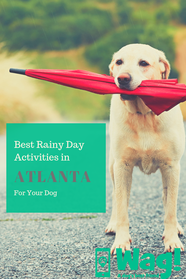 Top Activities For Dogs In Georgia On Rainy Days Wag Dogs