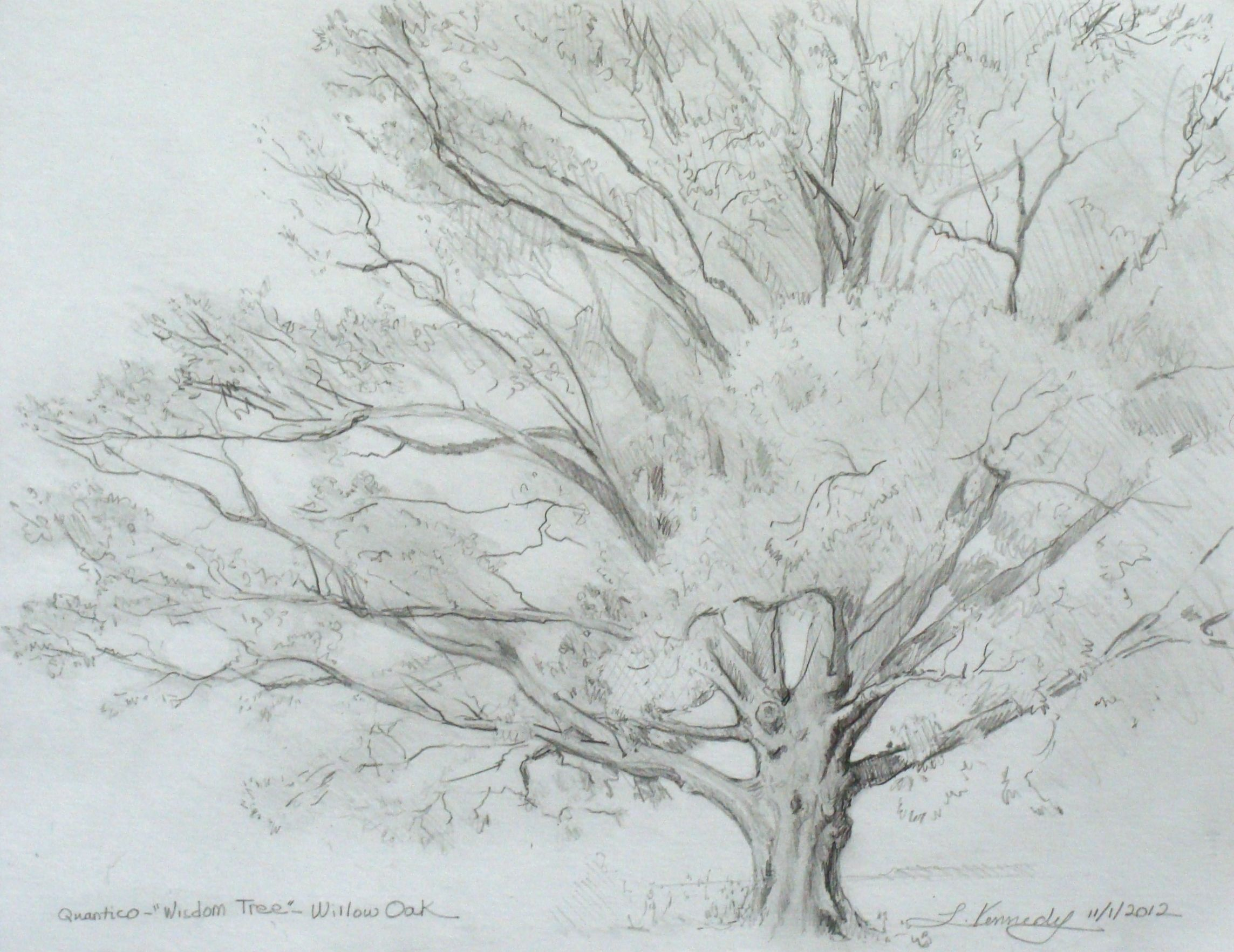 How To Draw A Tree, Lillian Kennedy €� Tree Drawing (weeklyartlesson)