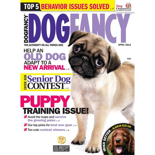 Dog Fancy Subscription 4 50 Dogs Cat Insurance Old Dogs