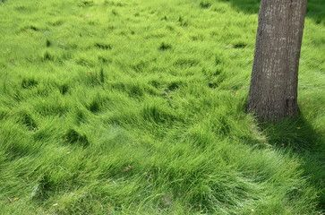 How To Prepare Your Yard For Winter Zoysia Grass Landscaping Austin Landscaping Melbourne