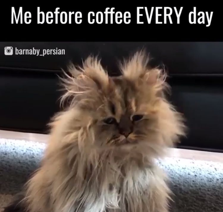 Me before coffee. Every. Day. Cat coffee, Coffee humor