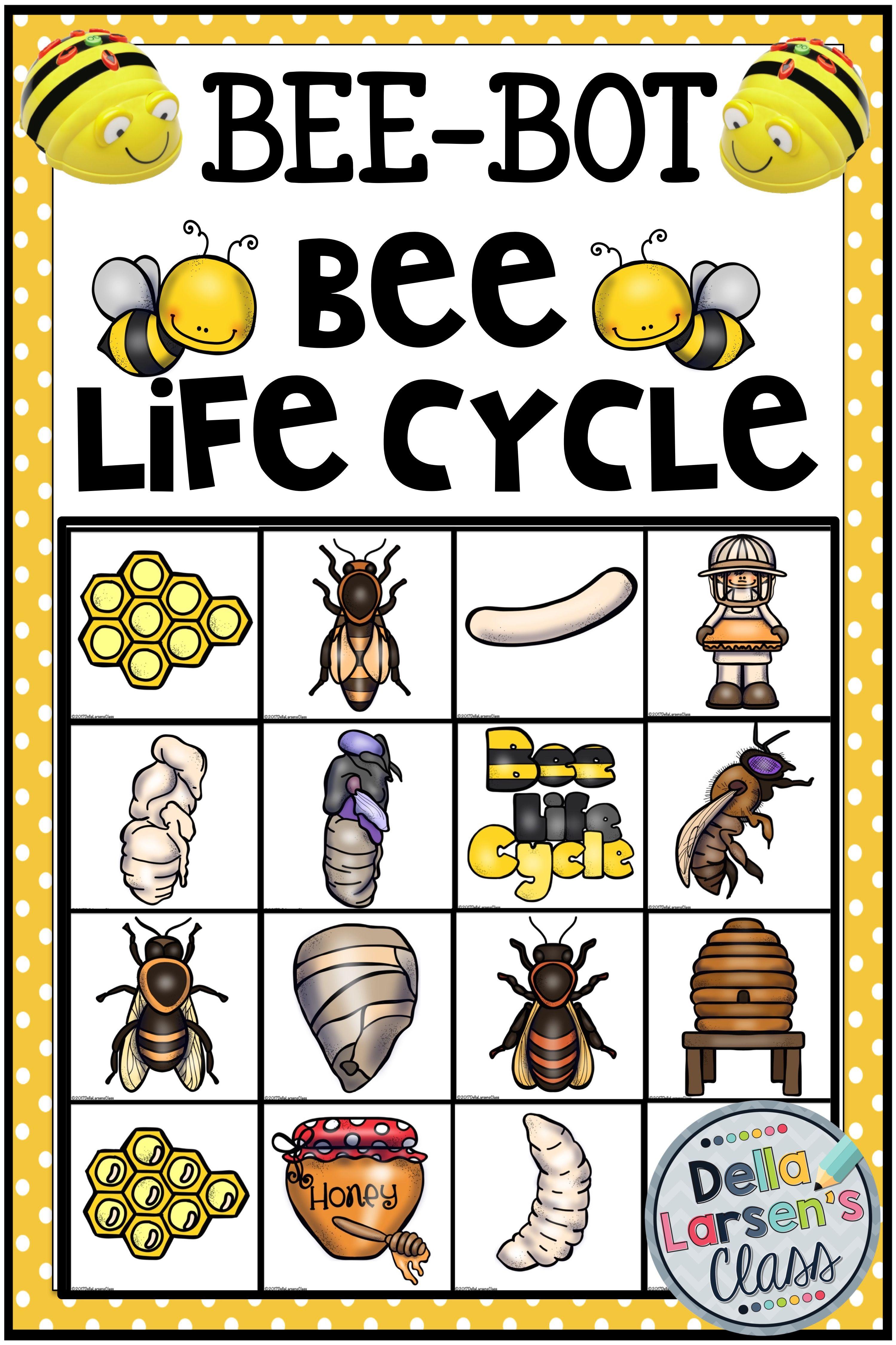 Bee Bot Bee Life Cycle
