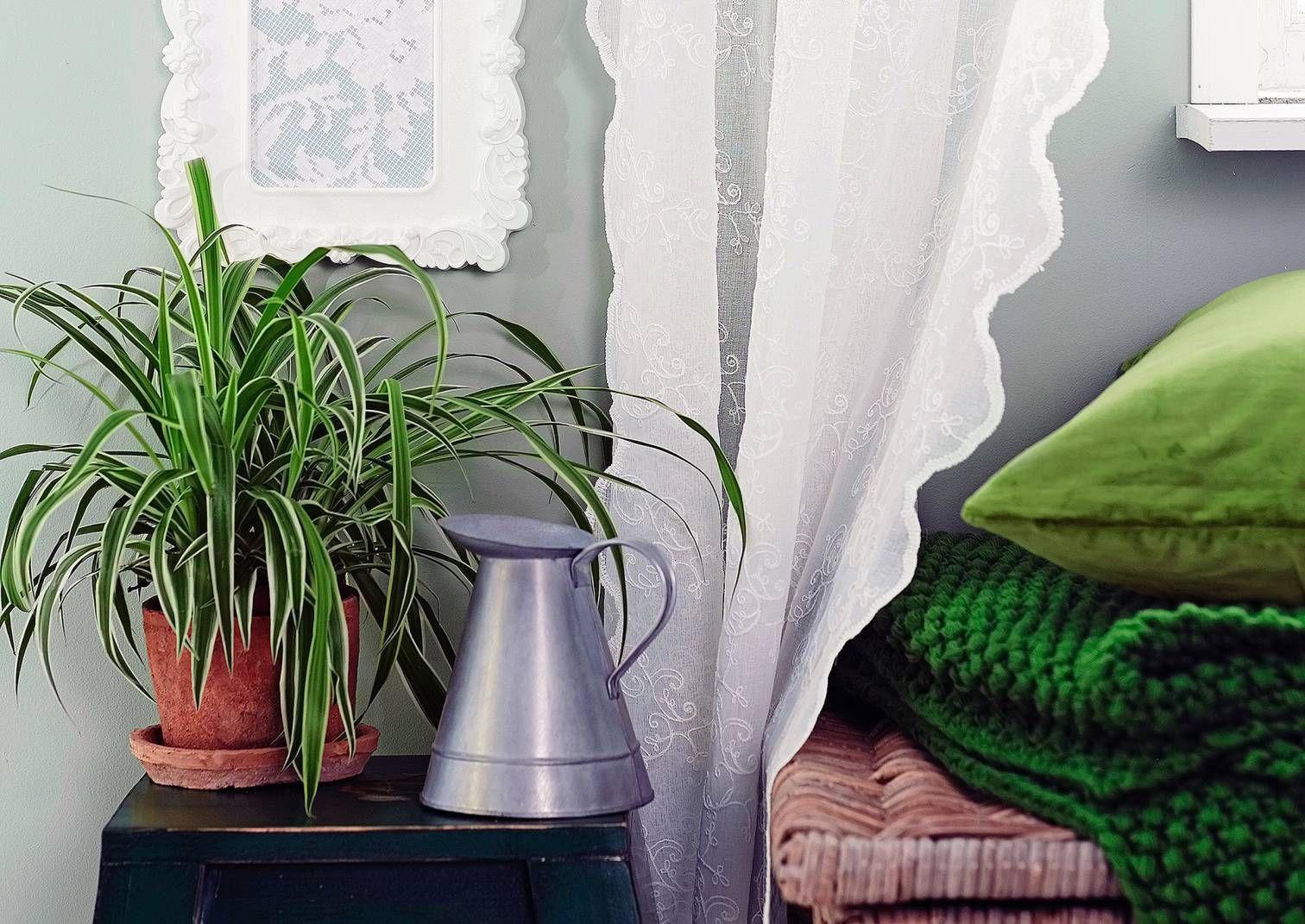 Viherkasvit tuovat sisustukseen viihtyisyyttä ja kerroksellisuutta. Lue Viherpihan juttu!
