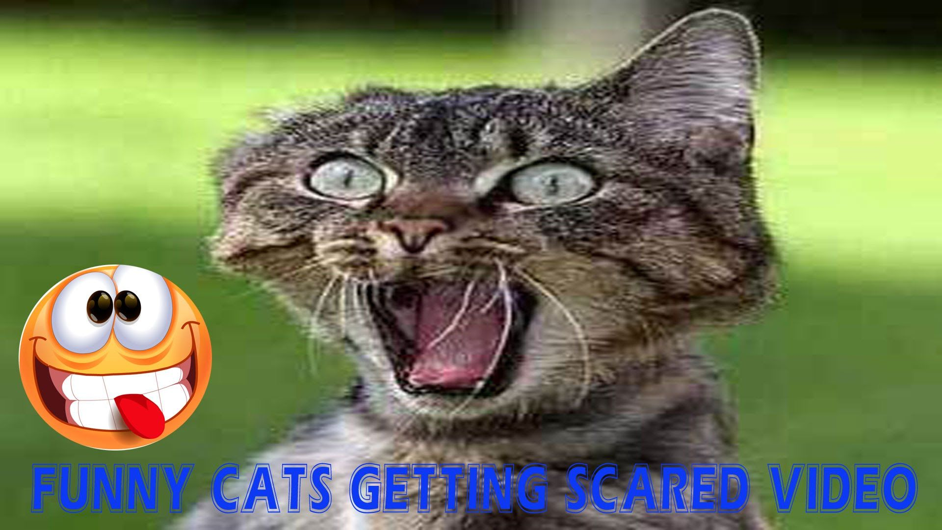Funny Cats Getting Scared Videos (With images) Funny gif