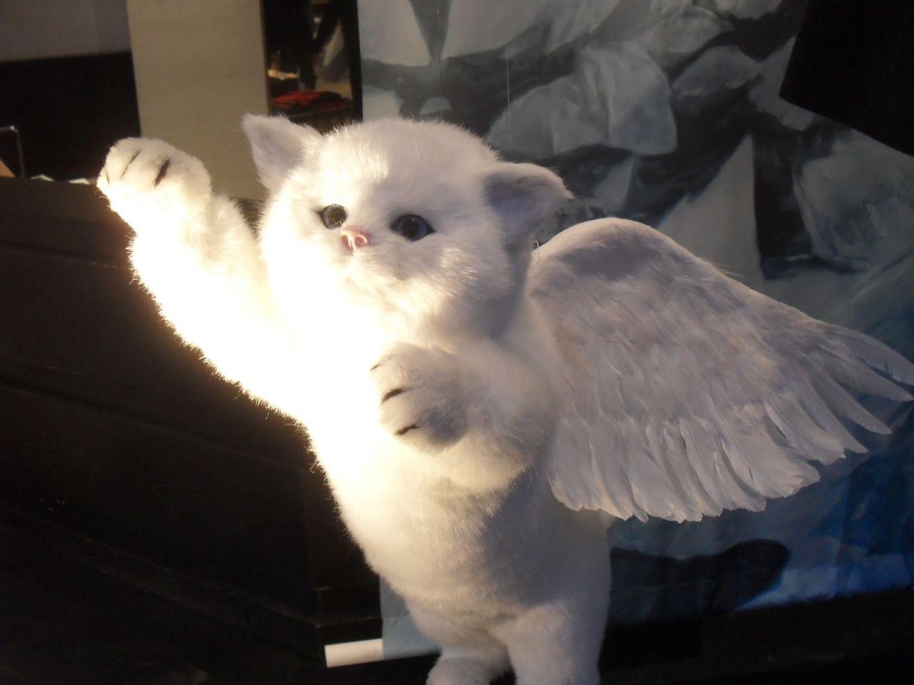 Kitten in angel wings lovely things pinterest curvy fashion