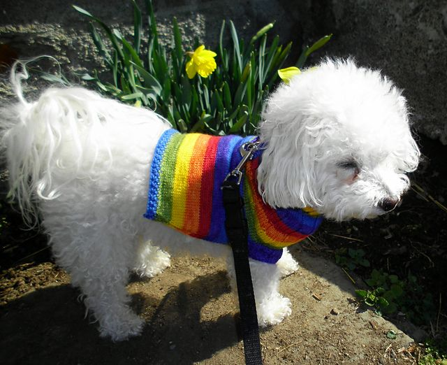 "Ravelry: SportyGranola's Pixie Rainbow Dog Sweater Knit with The Painted Tiger's ""Rainbow Stripe"" colorway."