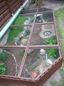 P1040584j tortues pinterest tortues terrestres for Zoo exterieur