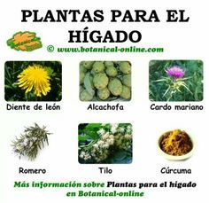 6 plantas saludables para el hígado