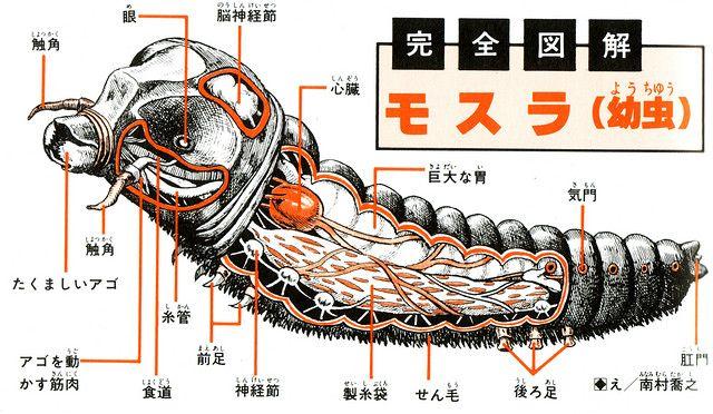 "Mothra larva from Shoji Ohtomo's ""Kaiju Zukan / Monster Picture Book"", 1967 by Shogo Endo"
